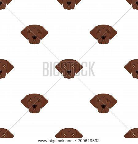 The dog breed is a labrador.Muzzle Labrador Retriever single icon in cartoon style vector symbol stock illustration .
