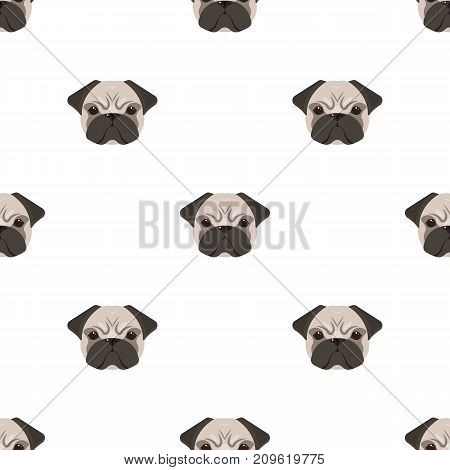 Breed of a dog, a pug.Pug's muzzle single icon in cartoon style vector symbol stock illustration .