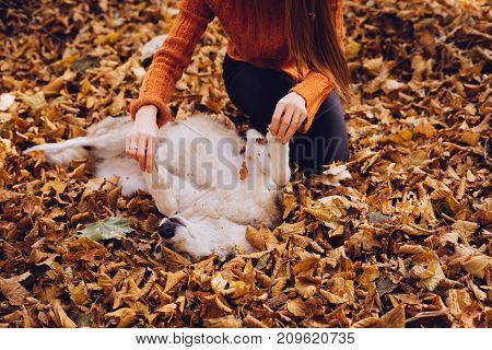 a girl in an orange sweater is playing with her dog on fallen leaves. Autumn weather, golden autumn.