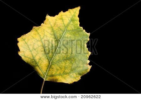 Isolated Closeup Of Nature Herb Leaf Plant