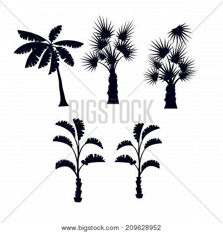 Tropical palm trees with leaves set. Nature plants, floral black vector silhouettes isolated on white background.