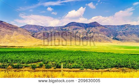 Irrigated farmlands along the Trans Canada Highway between Kamloops and Cache Creek in central British Columbia, Canada