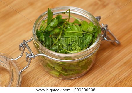 Food ingredient coriander leaves fresh green cilantro on wooden background closeup