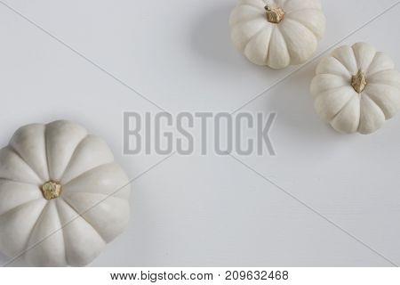 Three white mini pumpkins on white background.