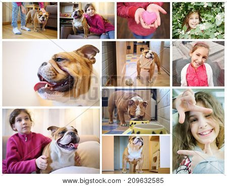 Collage with english bulldog and happy beautiful girl at home