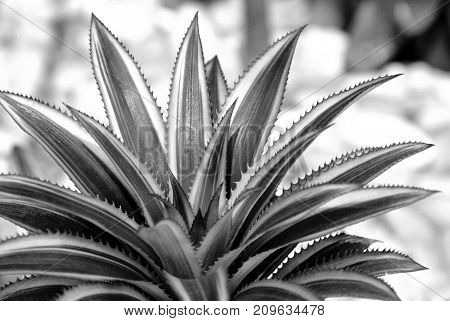 Close up of Bromeliad plants in garden
