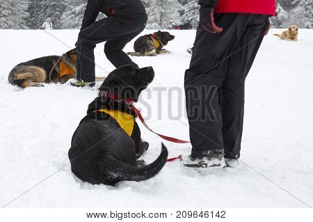 Rescue dogs from Mountain rescue service at organization participate in a training for finding people buried in an avalanche. Both men and animals are trained before going on duty.
