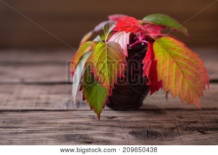 Autumn leaves in a ceramic vase. Red-green leaves of grapes in a ceramic pot on an old wooden table. Selective focus free space left