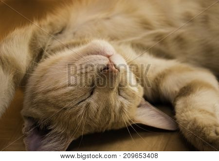 A cute kitty sleeps in the afternoon and enjoys the athmosphere.