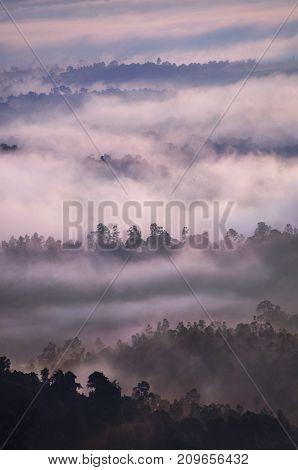 Sunrise over tropical rainforest with fog, Bukit Panorama, Sungai Lembing, Malaysia, Asia