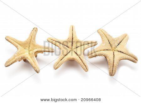 Three Seastars