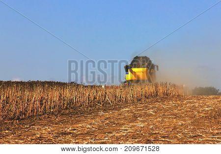 harvester Cuts Mature Dry Sunflowers, Harvest Harvest