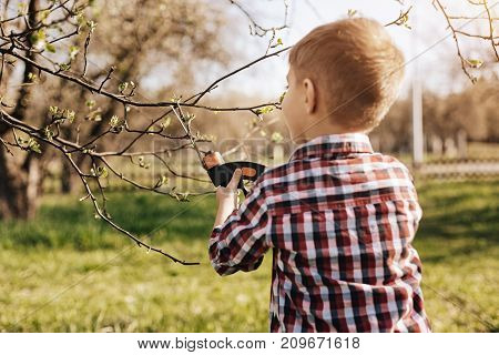 Preparing trees for summer. Little gardener holding special instrument and looking at tree while spending time with pleasure