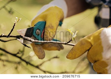 Protective gloves. Competent man loving nature and cutting unnecessary branches while helping to grow big tree