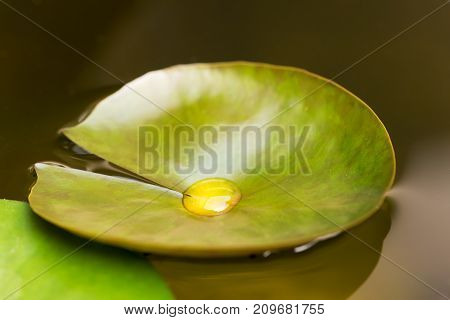 Water drop on a leaf in a pond, China