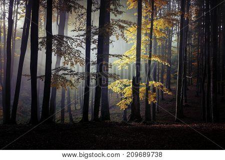 Autumn landscape of a beautiful forest, In Transylvania