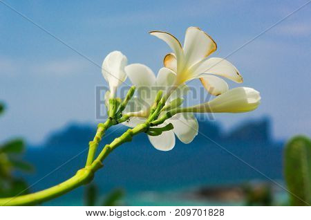 Flora and Sea Tropical Verdure