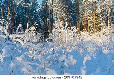 Cold Sunshine Frosty Glow