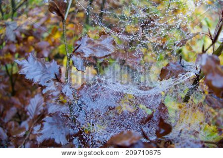 Spider Web Detail With A Morning Dew