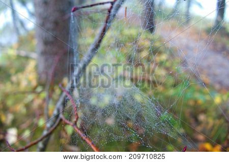 Spider Web Detail With A Morning Dew In Forest