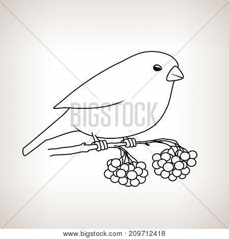 Bullfinch on a Light Background Bullfinch Sitting on a Branch with Bunches of Rowan Drawing in Linear Style Christmas Decorations Merry Christmas and Happy New Year