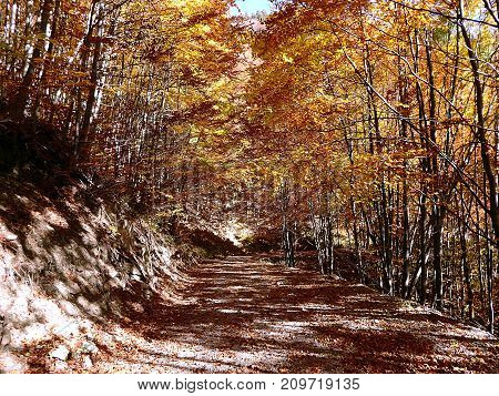 Gravel road with autumn foliage , Forest stone path