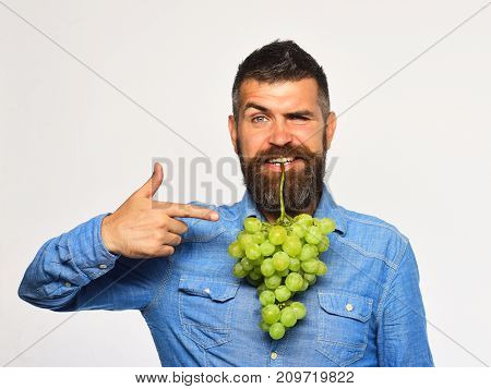 Farmer Shows His Harvest. Winemaking And Autumn Concept.