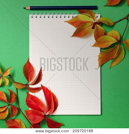 Notepad with foliage of wild grapes on a green background. Postcard. Autumn.