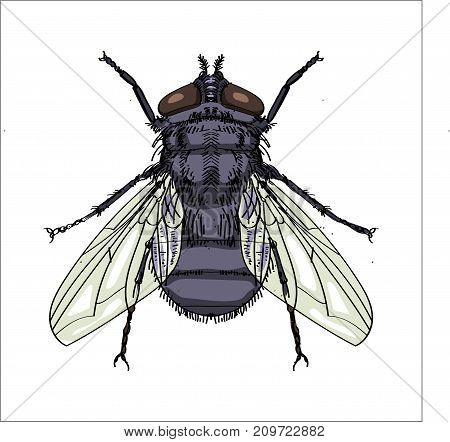 Illustration of House fly Isolated on white background. Children's illustration. Vector.