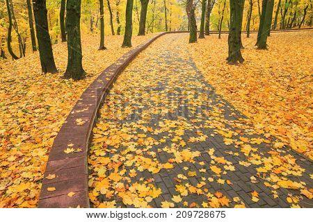 Beautiful Golden Autumn In The City Park
