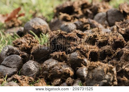 A heap of donkey dung on the meadow