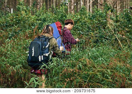 Tourist making their way through dense thicket