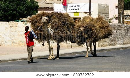Portrait of man with camel transporting hay and firewood - 08-03-2011 Keren Eritrea