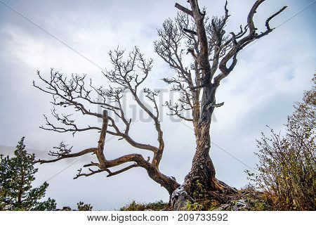 Scenic autumn view with dead tree, mountain landscape and dramatic sky