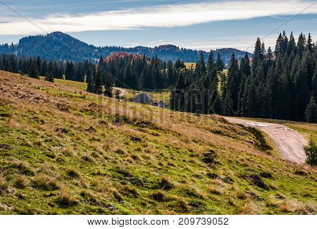 country road through village and spruce forest. lovely mountainous morning landscape in autumn