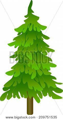 illustration of green Christmas tree on white background