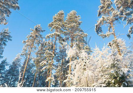 Wintry Landscape Sunny Winter