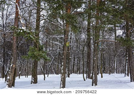 Winter nature. Birdhouses for birds in the winter forest