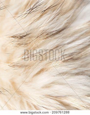 background made of natural fur . Photo of an abstract texture
