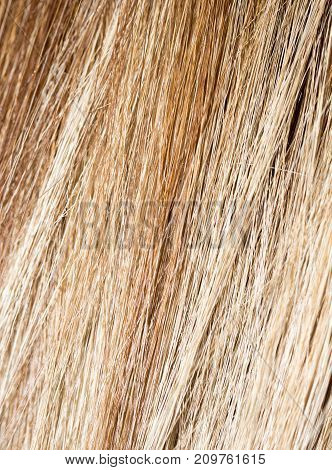 long blond hair as background . Photo of an abstract texture