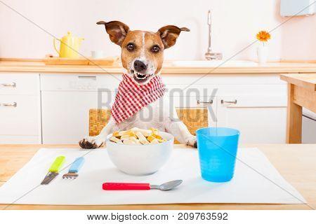 Chef Cook Dog In Kitchen