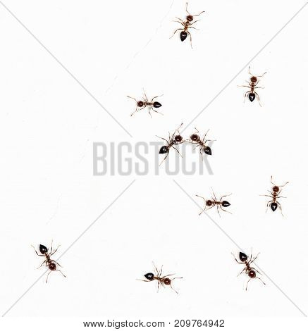 ants on a white wall. close-up . In the park in nature