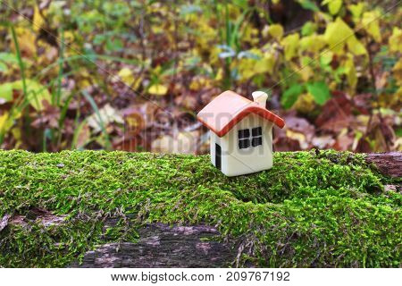 doll house on a tree covered with green moss