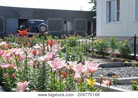 lily flowers in garden designing for cottage houses