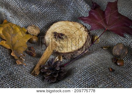 Autumn still life with leaf nuts and piece of wood on brown fabric.