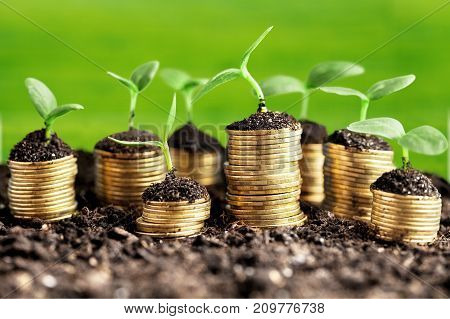 Plants coins green background money business financial