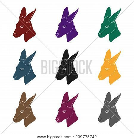 Kangaroo icon in black design isolated on white background. Realistic animals symbol stock vector illustration.