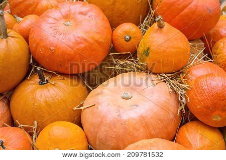 Orange and red pumpkins. Agricultural products on the hay. Autumn harvest on a market