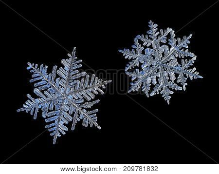 Two snowflakes isolated on black background. Macro photo of real snow crystals: big stellar dendrites with glossy surface, hexagonal symmetry, ornate arms, lots of side branches and elegant shapes.