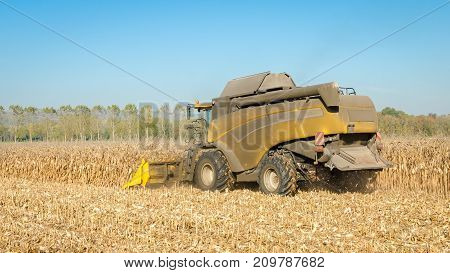 yellow combine harvester at work in a cornfield on a farm